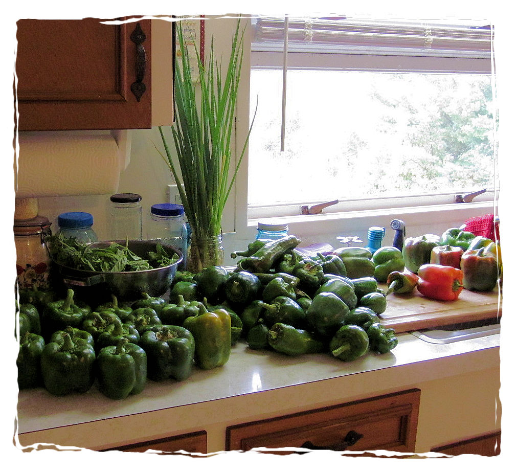 Many green bell peppers